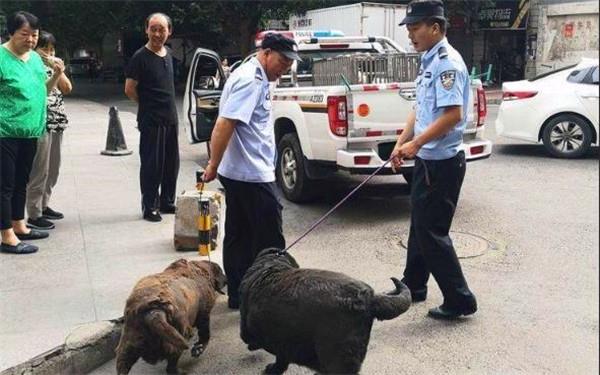 西安养狗人注意了!狗绳超2米 狗主
